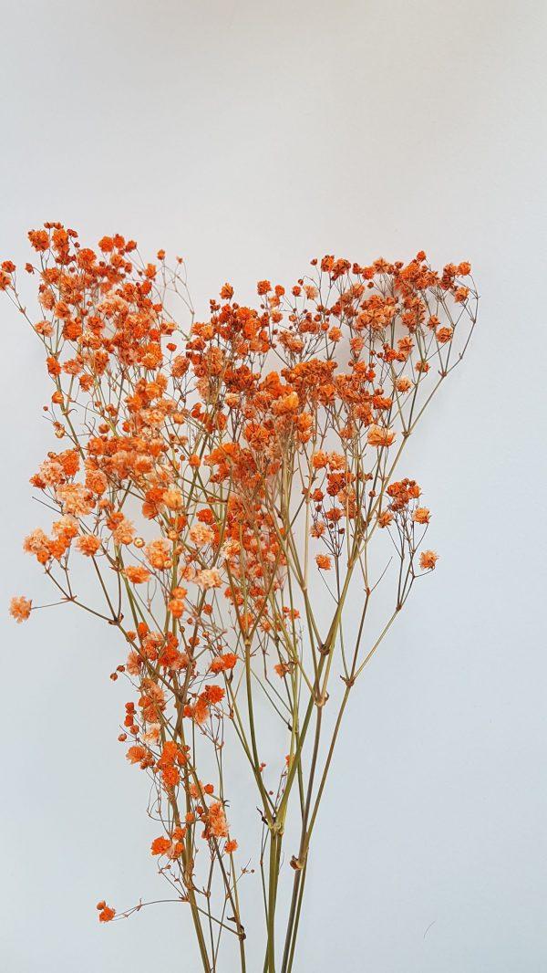 Droogbloem droogboeket interieur met droogbloemen uitgeest heemskerk castricum webshop droogbloemen