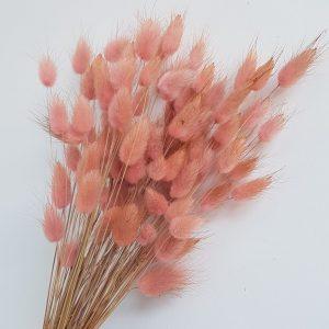 Lagurus droogbloemen konijnenstaarten roze bloemen uitgeest heemskerk akersloot boeket bestellen