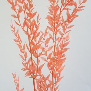 Ruscus peach gedroogde bloemen webhop droogbloemen driedflower webshop