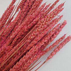 Tarwe roze droogbloemen webshop gedroogde tarwe leafs flower art