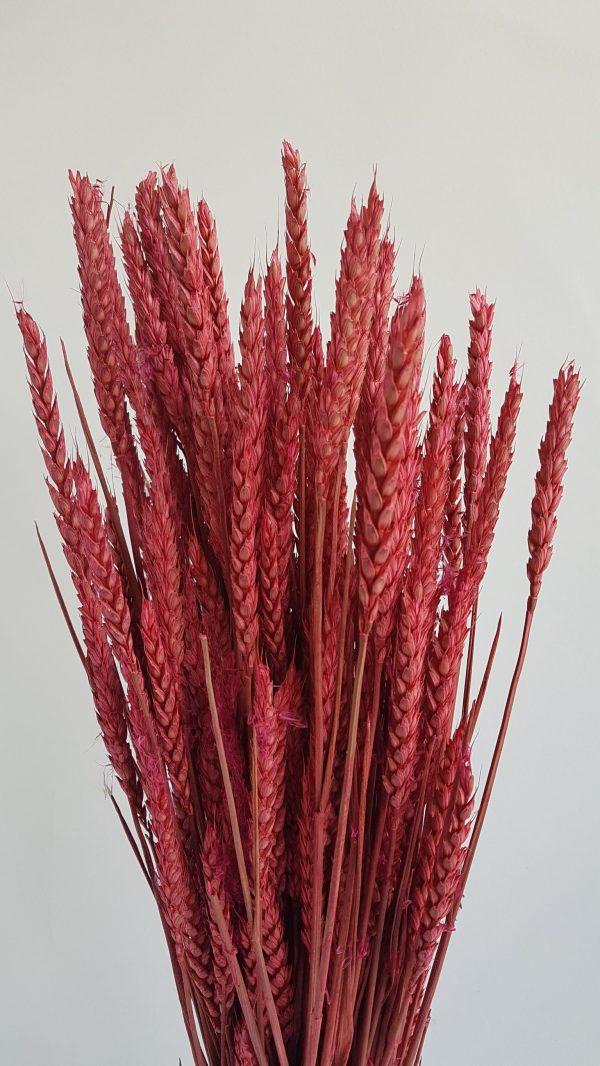 Gedroogde bloemen boeket bestellen heemskerk uitgeest amsterdam zaandam