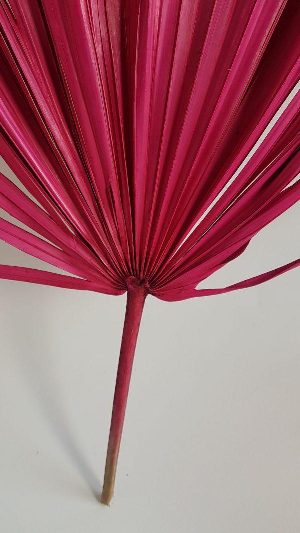 palmblad roze gedroogde bloem droogbloemen droogboeket webshop